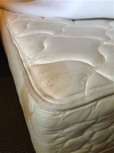 Water Stain On Mattress by Stain With Bed Bug And Hair Picture Of Inn At