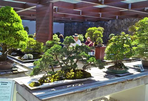 3 Highlights Of The National Bonsai And Penjing Collection Canberra Botanic Gardens Cafe