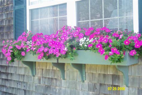 petunia window box by grandmanan photo weather underground