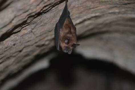 bats live in the tunnels picture of cu chi tunnels ho