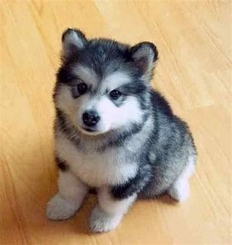 breeds that stay small small breeds small small puppies that stay small different small dogs