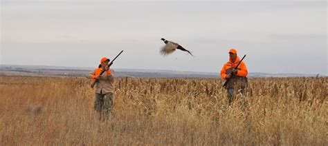 how to a to pheasant hunt plan your kansas pheasant and quail hunt now jax surf fishing