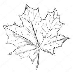 feuille d 233 rable unique sketch image vectorielle 63668563