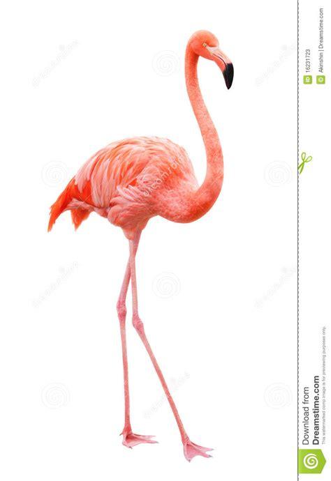 imagenes animal flamenco flamenco del p 225 jaro imagen de archivo imagen de fauna