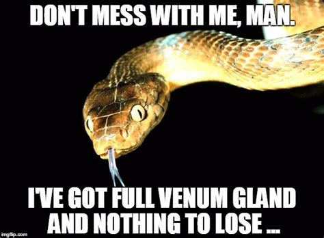Snake Meme - how does snake venom kill humans why doesn t it kill the
