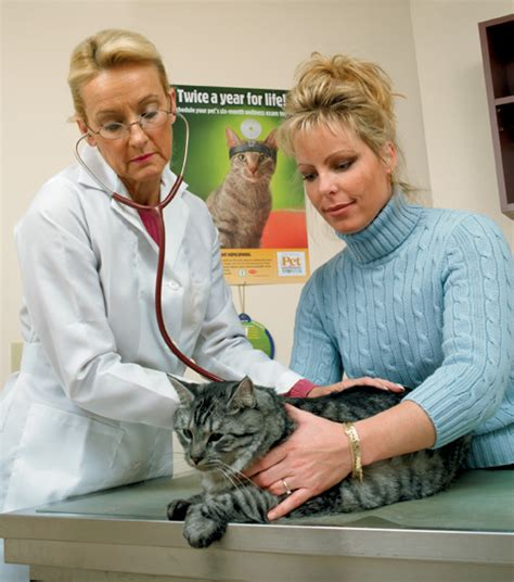 take your cat to the vet week purrmotes wellness catster