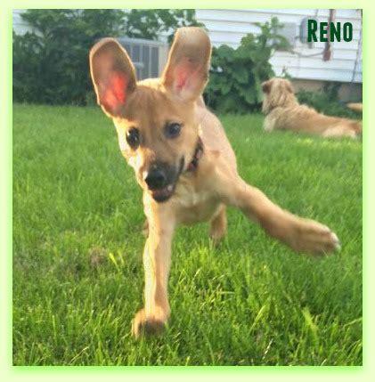 dogs reno reno safe rescue