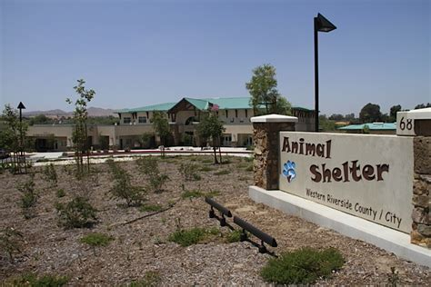 riverside shelter view topic riverside shelter rp accepting chicken smoothie