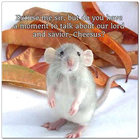 Rodent Meme - cute mouse or rat meme rats