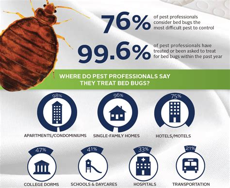 bed bug infestation treatment bed bug treatment in vancouver you kill bed bugs 1 844 411 2657