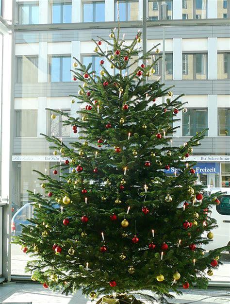 dekorieren weihnachten akzente pflanzen design berlin