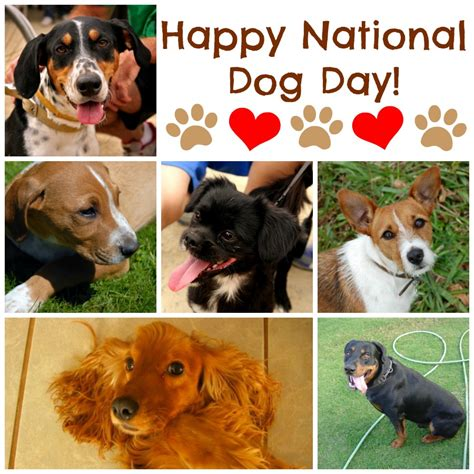 dogs day why dogs make our lives better national day pawsitively pets