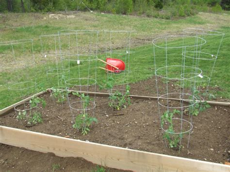 Raised Tomato Planter by Planting Vegetables In A Raised Bed Garden