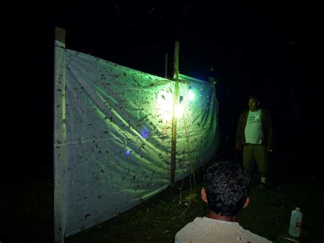 Insect Light Trap by Panoramio Photo Of Light Trap Insect