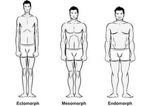 your body type ectomorph mesomorph or endomorph