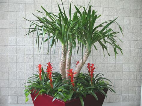 house trees tropical house plants for your garden room interior design inspiration