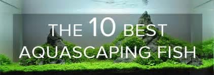 the best aquascape the 10 best aquascaping fish aquarium info