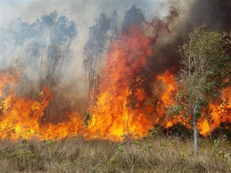 florida wildfires wildfires burn 126 000 acres across florida this year