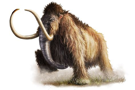 wooley mammoth by deanspencerart on deviantart