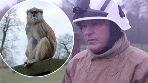 discount vouchers woburn safari park woburn safari park fire which killed 13 monkeys sparked by