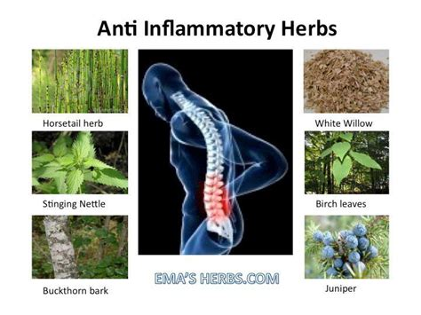 best medicine for inflammation anti inflammation natural remedies
