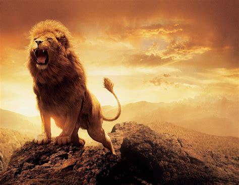film lion roar narnia aslan wallpapers wallpaper cave