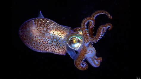 color squid nanorod made display tech inspired by color changing squids