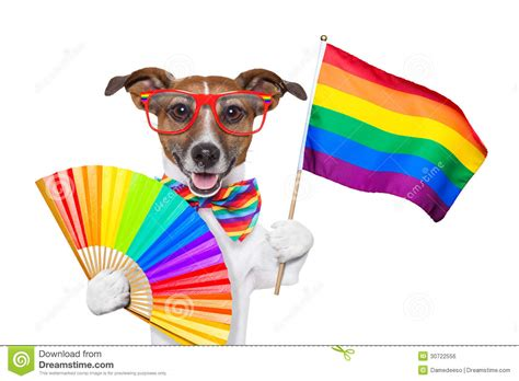 puppy pride pride royalty free stock image image 30722556