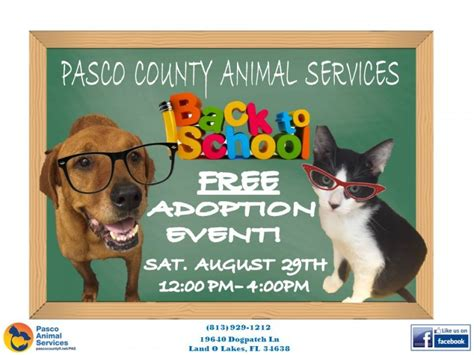 free puppies pasco county free adoption event hoped to ease shelter overcrowding land o lakes fl patch