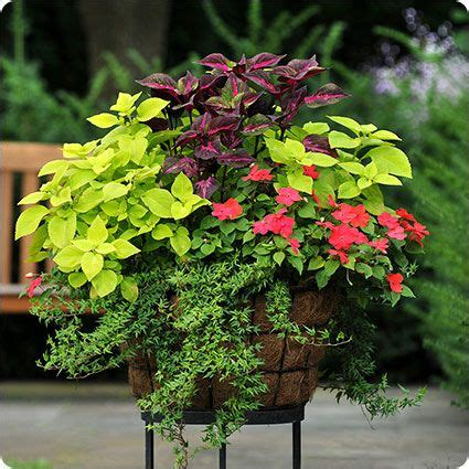 Planter Ideas Sun by Shade Container Garden Landscaping Inspiration
