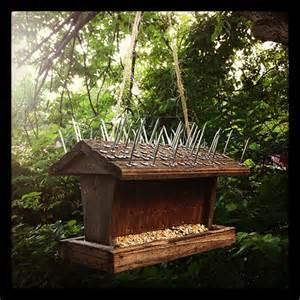 anti squirrel bird feeder keaggy com
