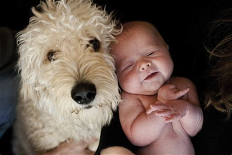 best dogs for babies your best baby and photos mom365