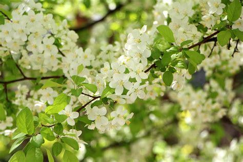 Free Images Landscape Nature Forest Branch Blossom Flowers In Vegetable Garden