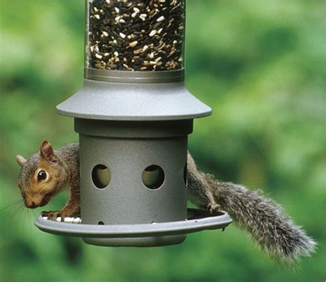 squirrel proofing bird feeders bird cages