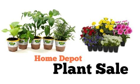 home depot plant sale annuals   southern savers