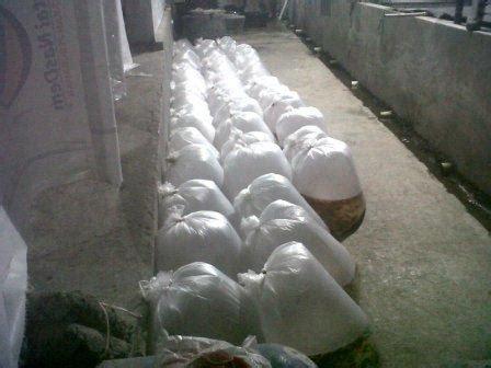 Bibit Ikan Bawal Pekanbaru mega farm pusatnya benih dan bibit ikan bawal murah