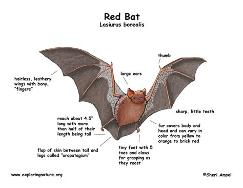 baseball bat diagram bat diagram