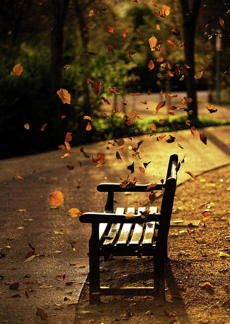 fall bench fall leaves on park bench photograph by manuel orero galan