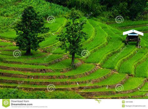 terrazze della risaie su a terrazze della mu cang chai yenbai