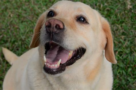 trauma  heartbreak    abandoned dogs  bengaluru  news minute