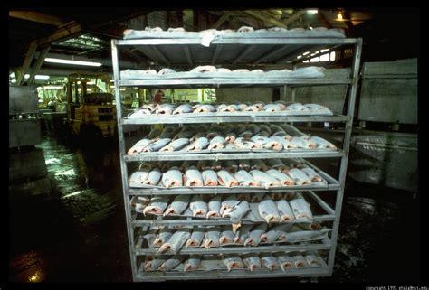 Salmon Rack by Pfi Frozen Salmon Rack 29