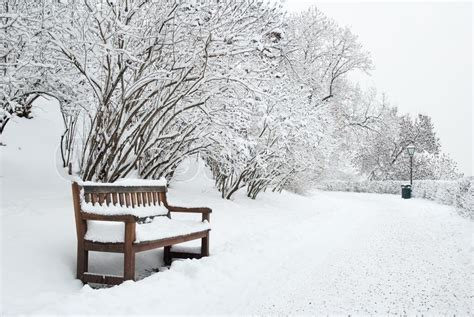 bench in snow park bench and trees covered by heavy snow stock photo