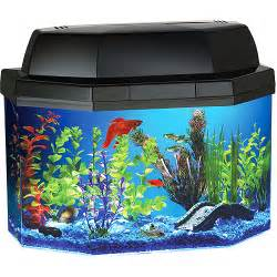 Here?s a nice 5 gallon tank. (Notice it?s a community tank, and