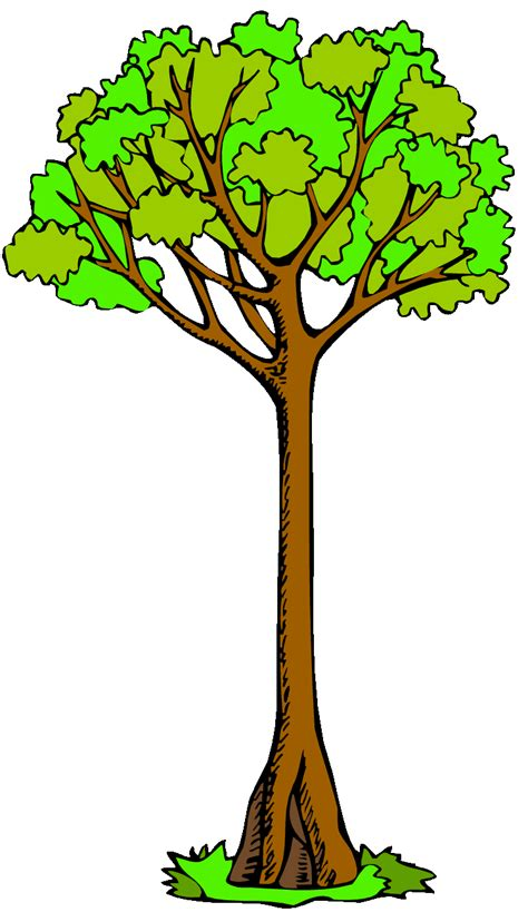 tree clipart clip tree clipart best