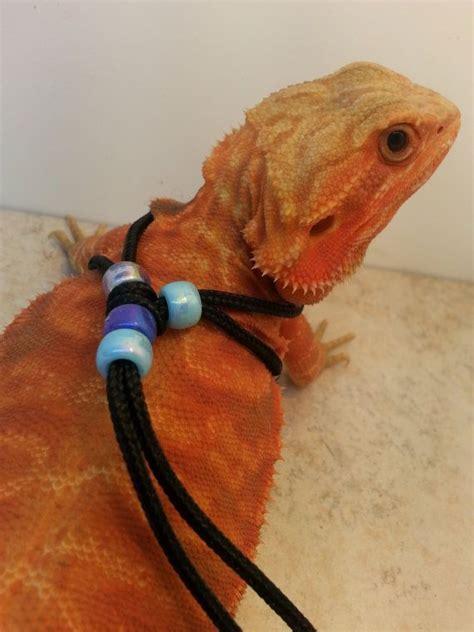 reptile harness adjustable  size fits  blue etsy