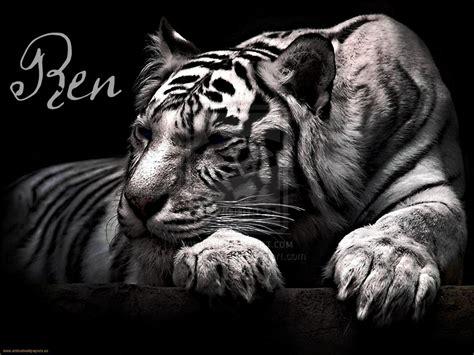 Seri Tiger Saga2tigers Quest Colleen Houck a maldi 231 227 o do tigre colleen houck frases