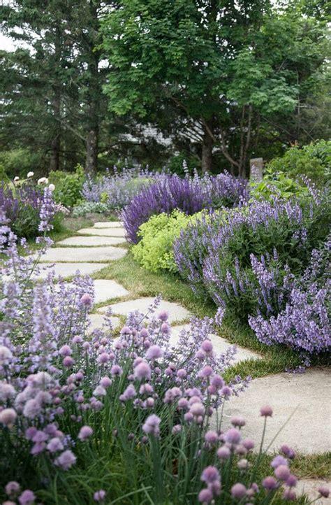 shrubs for cottage garden 17 best ideas about landscape design on garden design green plants and plant design