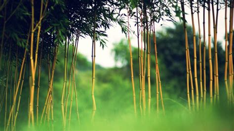 bleona new photos in high quality hd 2015 bamboo new hd wallpapers 2015 high quality all hd