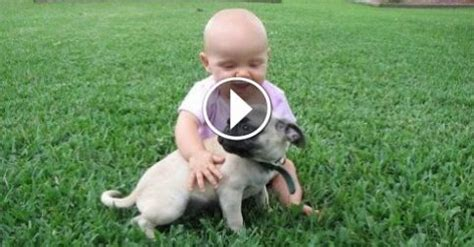 pugs and babies pug and baby compilation from the coolest one
