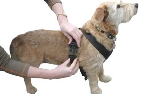 how to put a harness on a what s in a harness mybusydog